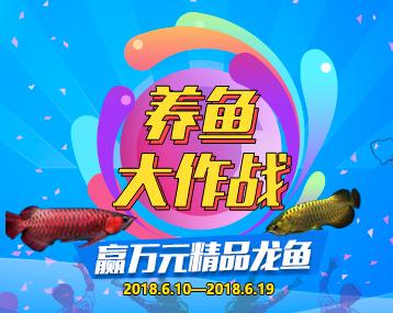 """""""养鱼大作战""""赢万元精品龙鱼"""