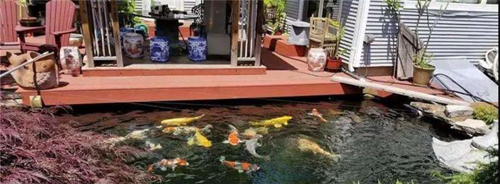 一池,一家人,三五鱼,这是生活。  (07-02)
