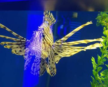 漂亮海水鱼
