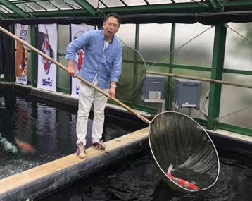六月,我们用半个月时间走访了日本的锦鲤园
