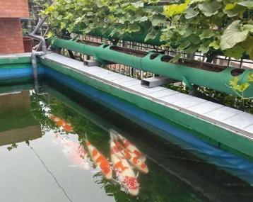 一缸,养鱼养菜养花养绿植!