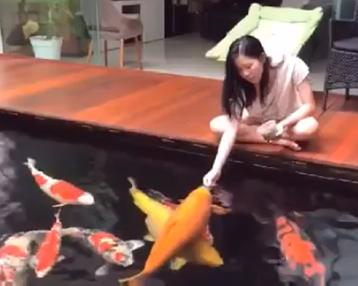 你是喜欢这样的人?还是喜欢这样的鱼?