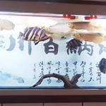 龙鱼泰虎混养缸