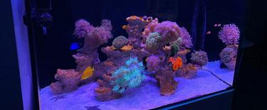 只要海水养得好。家里也是巴厘岛