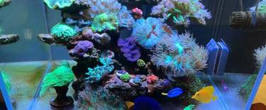 60海水缸继续更新