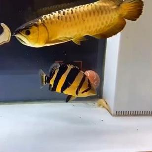 鱼有上岸 品质不错